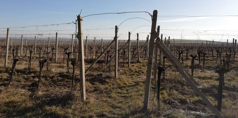 První den u Loigiho: stříhací pokusy na havranickém vinohradu i prohlídka obousklepů